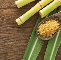 sugar-cane-picture